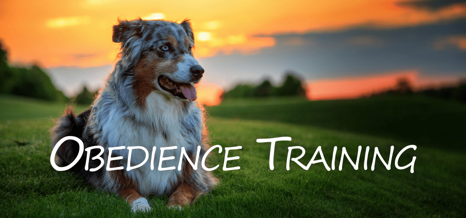 Southern Tradition Kennels Dog Training Obedience Boarding South Ga Dog Training
