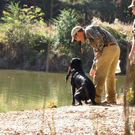 Gun Dog Training